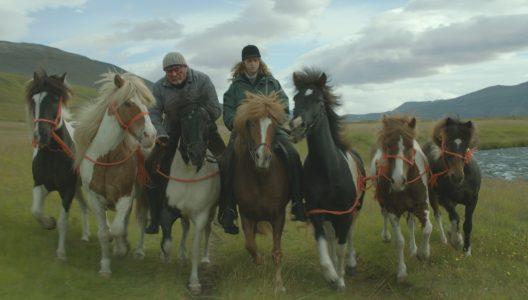 ISLANDSK FILMUKE: OM HESTER OG MENN